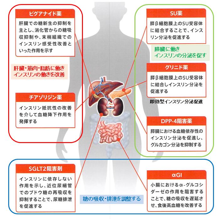 経口糖尿病治療薬